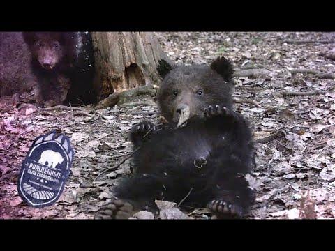 Рождённые быть свободными. Медвежья школа. Серия 1