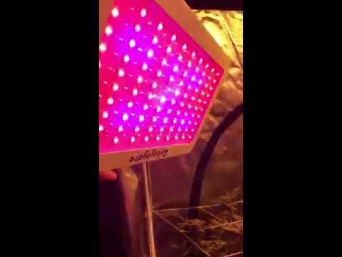 4x4 tent dwc legal grow - YouTube