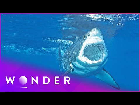 This Man Survived A Shark Attack | Human Prey S1 EP2 | Wonder