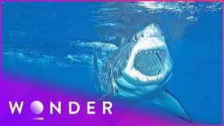 This Man Survived A Shark Attack   Human Prey S1 EP2   Wonder