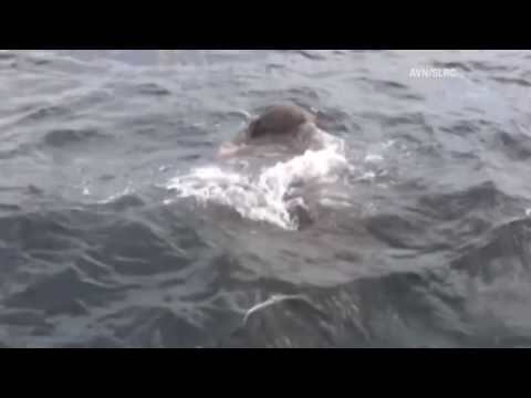 Caught on camera: Drowning elephant saved