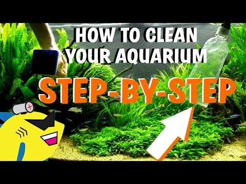 HOW TO CLEAN YOUR AQUARIUM - Planted Tank Water Change/Gravel/Substrate Cleaning