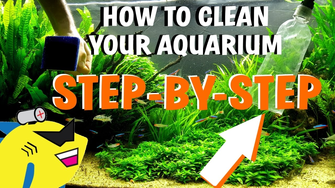 How To Clean Your Aquarium Planted Tank Water Change Gravel Substrate Cleaning Youtube