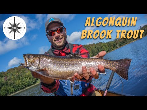 Catching Back To Back Brook Trout - Fishing In Algonquin Park