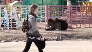В Бугуруслане живого медведя привязали к забору садика