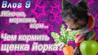 Чем кормить щенка йорка?