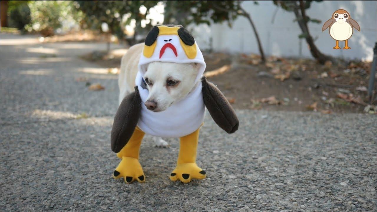 Star Wars DIY Pet Costume & MY PET PORG! | Star Wars DIY Pet Costume - YouTube