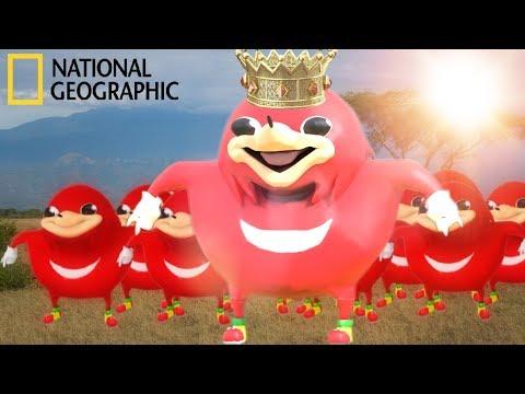 Ugandan Knuckles   Wildlife Documentary