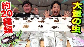 大量の虫を食って美味しいやつを選べ!ムシランキング!!!