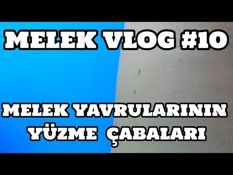 Melek Vlog #10 (Melekler Yavrularının Yüzme Çabaları)