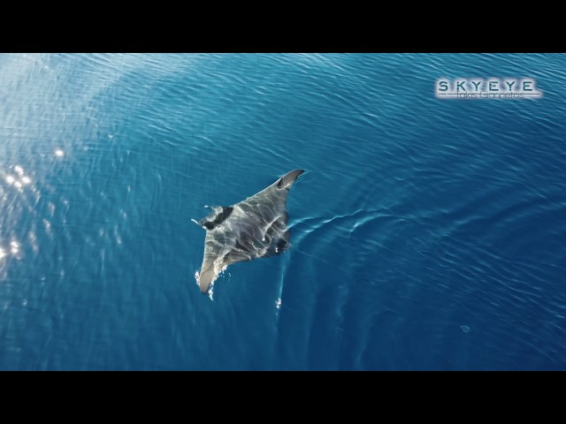 ??? ??? ??? ?????? ??? ??????  2,5 ????? | A rare aerial footage from a Ray 2.5 Meters MYCONOS