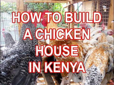 How to build a cheap modern en house poultry house in Kenya How to Poultry House Plans Kenya on poultry crate plans, hen house plans, ostrich house plans, homemade chicken house plans, chicken run plans, chicken house plan and plans, duck house plans, turkey house plans, chicken coop plans, rabbit hutch plans, chicken shelter plans, vintage chicken house plans, house chicken tractor plans, seed house plans, chicken brood pen plans, small chicken house plans, chicken hatchery plans, old chicken house plans, chicken nesting boxes plans, shed plans,