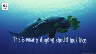 Helfen Sie erstellen einen #NetFreeNorth für Dugongs | WWF-Australien