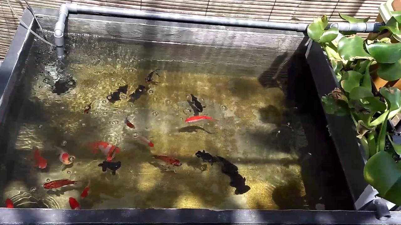 Beautiful Fish Ponds