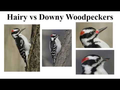 CEAP birds - woodpeckers and wrens