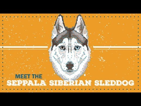 Seppala Siberian Sleddog | Breed Profile