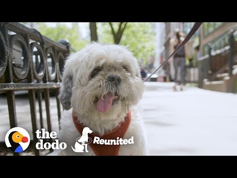This Dog Races to His Mom When She Finally gets out of the Hospital | The Dodo Reunited Season 2