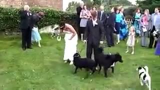 Шумная свадьба!