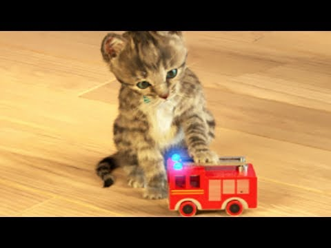 Little Kitten My Favorite Cat - Play Fun Cute Kitten Pet Care Mini Games For Children