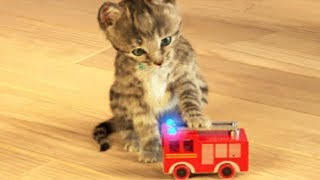 Little Kitten My Favorite Cat - Play Fun Cute Kitten Pet Care Mini Games For Children