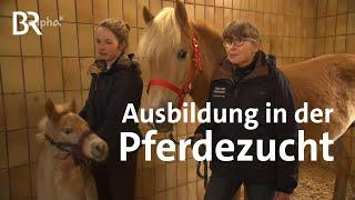 Pferdewirtin - Pferdezucht - Ausbildung - Beruf
