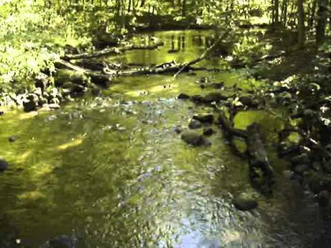 Hiking along Honey Creek in Michigan