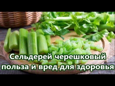 Вопрос: Можно ли давать кроликам листья салата и сельдерей В каком количестве?