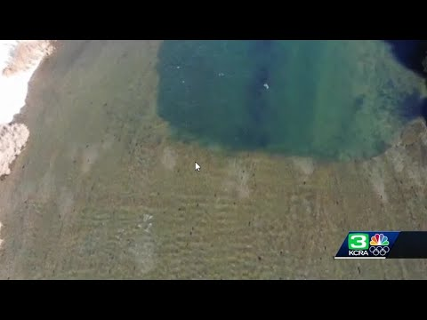 Solution To Salmon Problem Going Swimmingly In American River