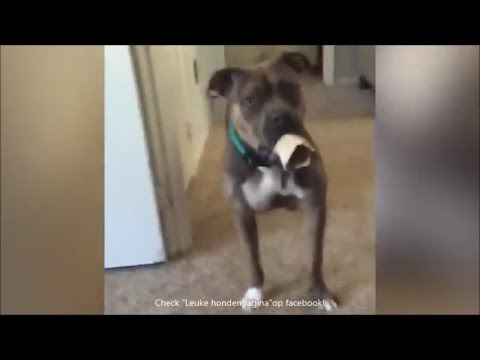 Grappige honden filmpjes compilatie. deel 2