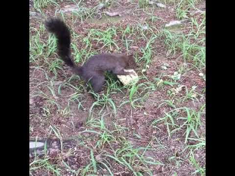 다람쥐 squirrel 남이섬 南怡 namisum