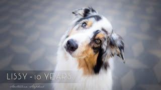 Lissy  10 Years [Australian Shepherd]
