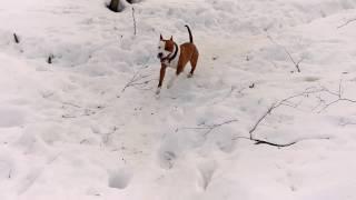 Ухватка для собаки из 4х тонной стропы.(, 2017-03-19T10:48:02.000Z)