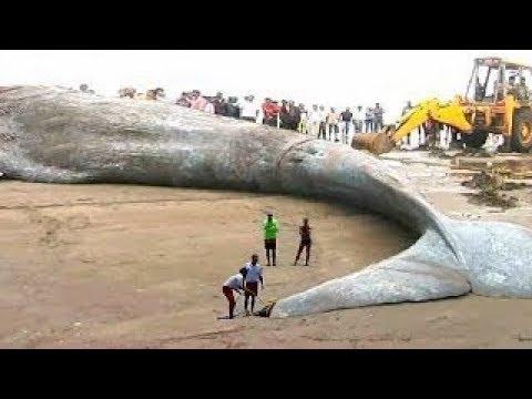 أكبر حيوان مرعب في العالم حجمه الحقيقي لا يصدق ولا يخطر على بال أحد Youtube