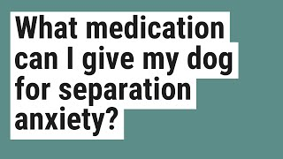 What medication can I give my dog for separation anxiety?