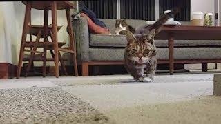 A Scuttling Lil BUB Cat