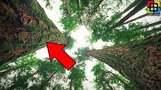 যদি এই গাছ দেখতে পান তাহলে দৌড়ে পালান | Top 5 Most Incredible Tree In The World (Part 3)