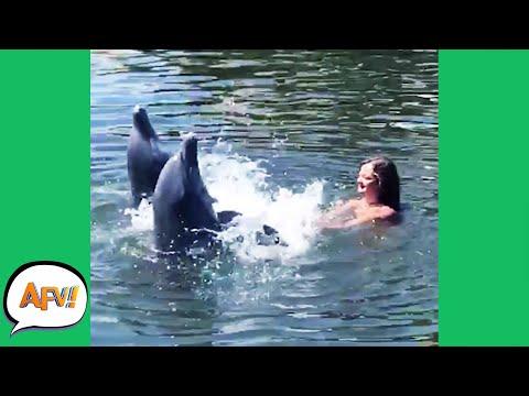 She's NOT PREPARED For the SPLASH! 😂 | Funny Wildlife Fails | AFV 2021