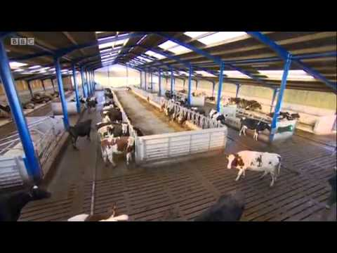 BBC North Story on Robotic Milking