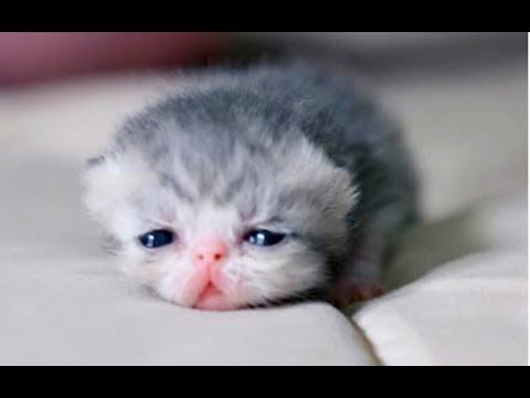 JUST WATCH These Cute Baby Animals – Cute Animal Babies Videos 2017