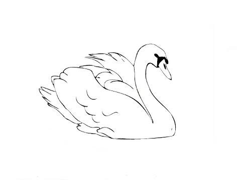 Как нарисовать лебедя картинки