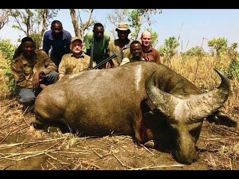 Bøffeljagt i Burkina Faso