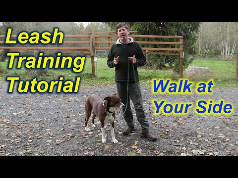 Teach your dog to walk at your side