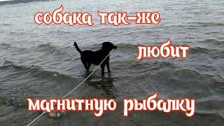 Собака так же любит магнитную рыбалку поход 38