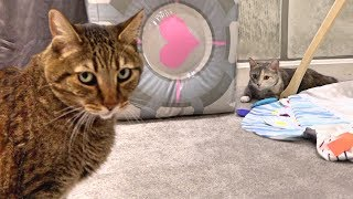 new-cat-house-tour-gone-wrong