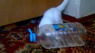 Кошка Ася и бутылка.