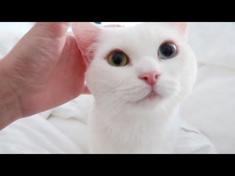 엄마 고양이가 좋은 꼬부기 💕