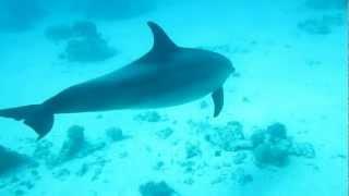 Delfiini, dolphin