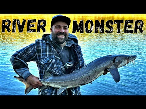 Catching My First Sturgeon! Edmonton, North Saskatchewan River.Trophy Fishing