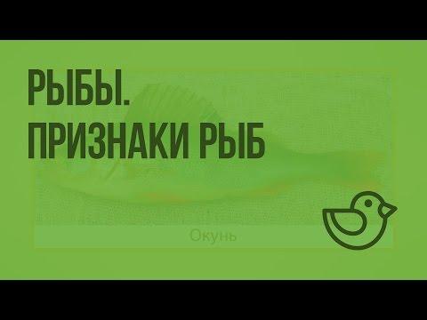 Видеоурок рыбы 1 класс