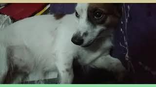 Kai the dog  amazing